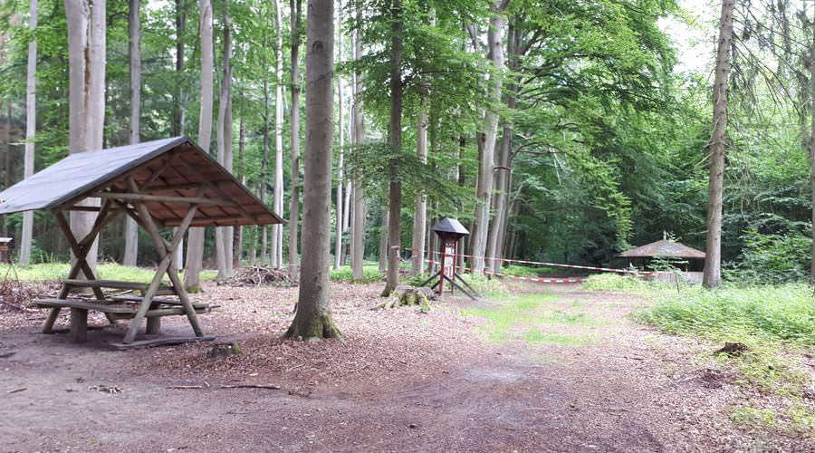 arboretum erbsland forst von mirow in mv | Reiseblog Rügen