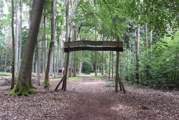 arboretum erbsland forstrevier mirow mecklenburg vorpommern | Reiseblog Rügen