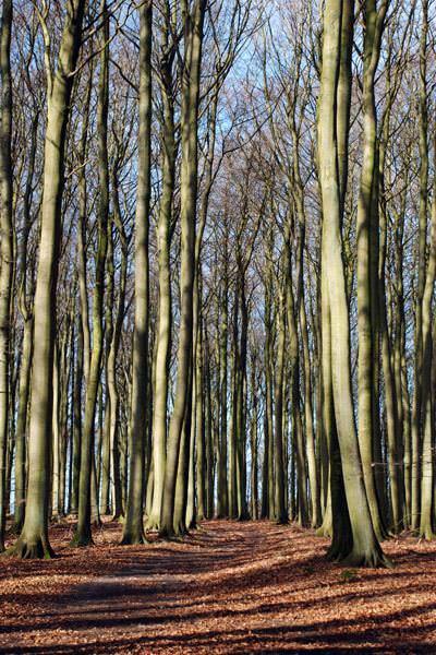 buchenwald auf ruegen aus dem leben eines foersters | Reiseblog Rügen