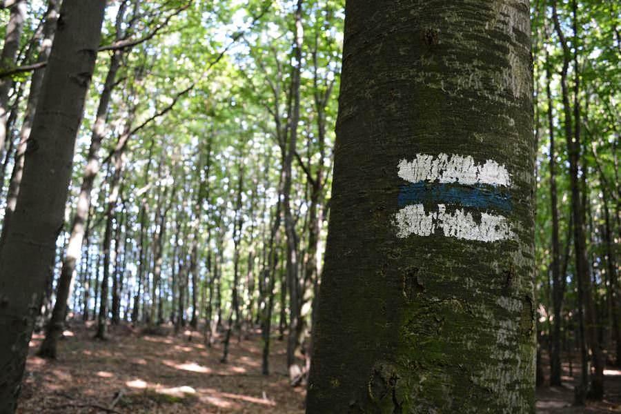 buchenwald nationalpark jasmund ruegen unesco welterbe | Reiseblog Rügen
