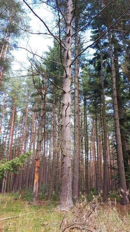 coloradotanne im arboretum erbsland in mirow | Reiseblog Rügen