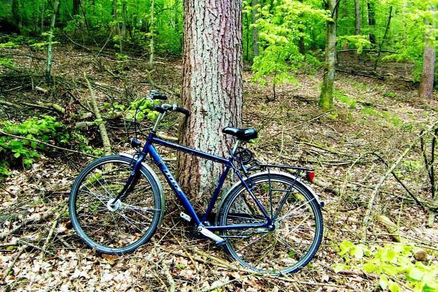 foerster beruf mit dem fahrrad zur waldarbeit | Reiseblog Rügen