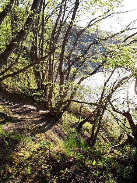 goehrener hoevt ruegen wald an ostsee | Reiseblog Rügen