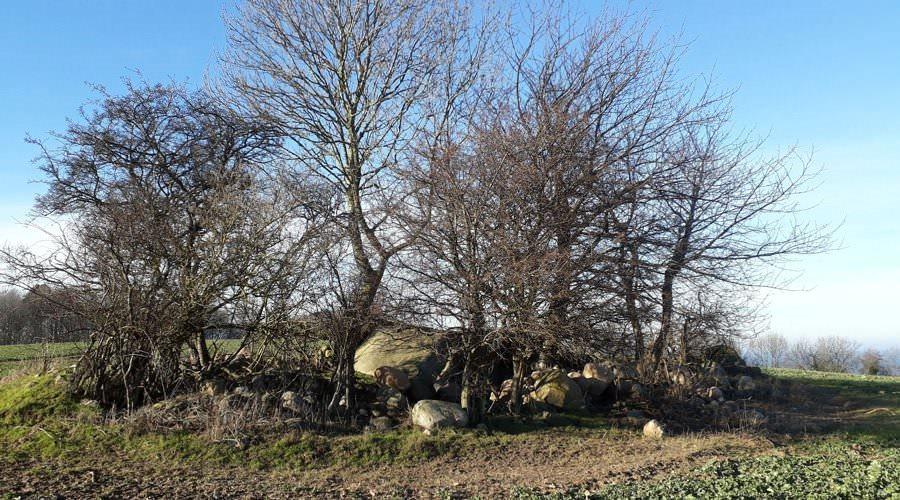 grosssteingrab in nardevitz auf der insel ruegen | Reiseblog Rügen