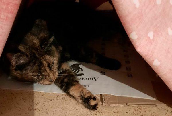 hauskatze tiergeschichte weihnachten 2020 ruegenblog slider | Reiseblog Rügen