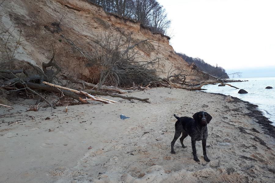 hund am strand ostseebad goehren auf ruegen | Reiseblog Rügen