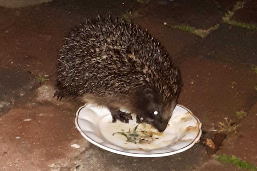 igelbesuch tiere auf der insel ruegen | Reiseblog Rügen