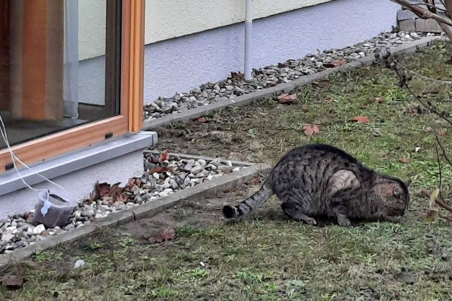 katze am fensterplatz tiere auf ruegen | Reiseblog Rügen