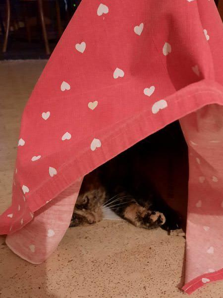 katzen friede zuhause auf ruegen | Reiseblog Rügen