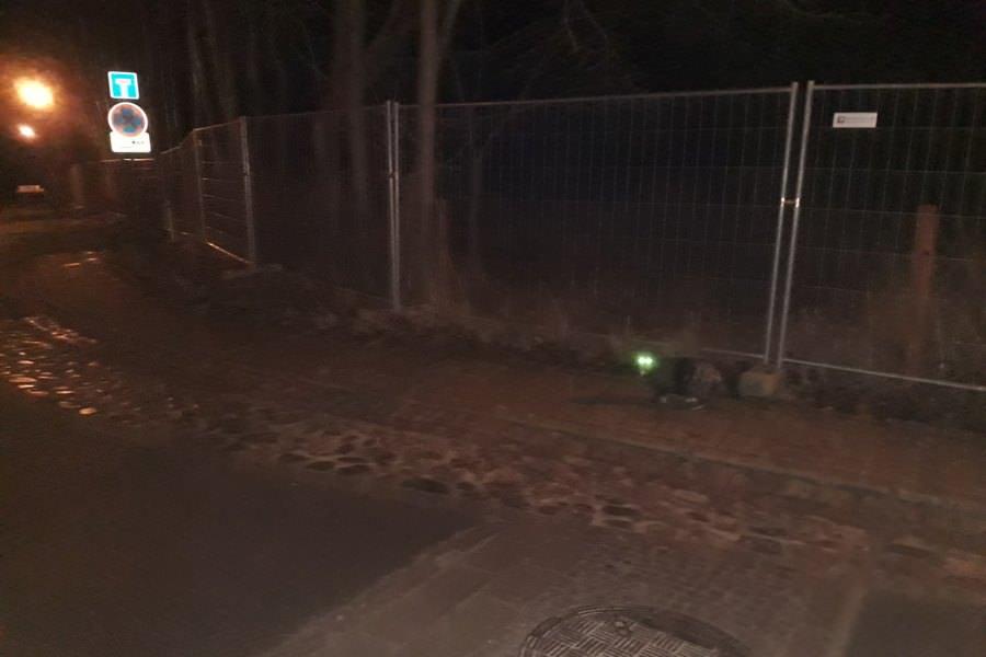 katzenaugen leuchten im dunkeln tiere auf der insel ruegen | Reiseblog Rügen