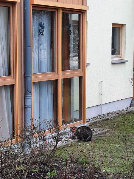 katzenfuetterung goehren auf ruegen | Reiseblog Rügen