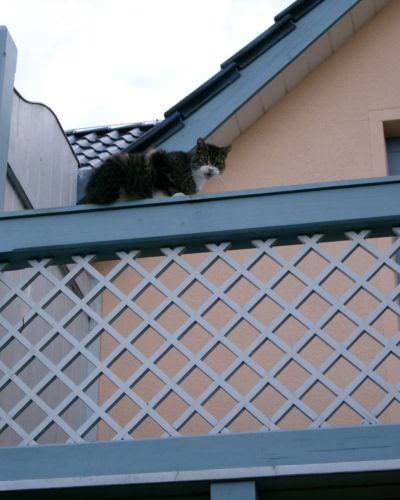 kletternde katze schonga balkon | Reiseblog Rügen