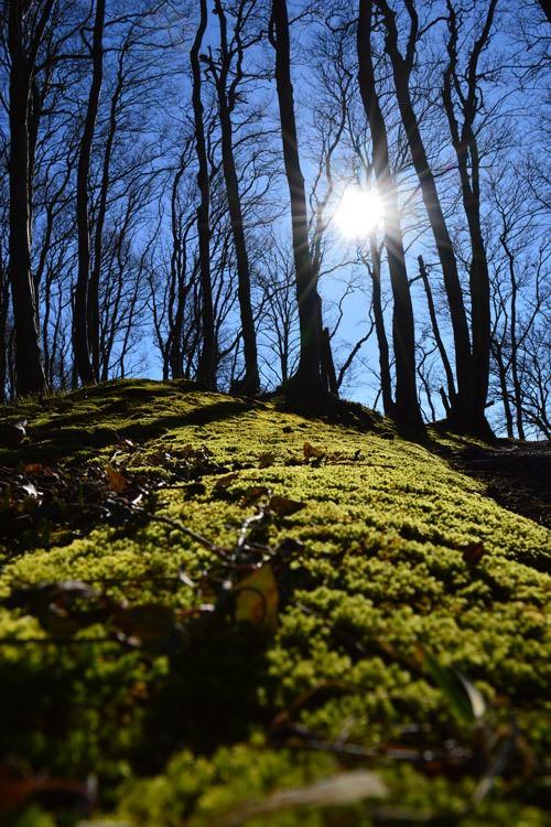 lietzow auf ruegen waldgebiet bodden | Reiseblog Rügen