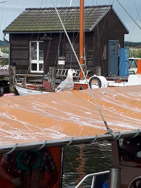 moewe auf fischerboot im hafen gager insel ruegen   Reiseblog Rügen
