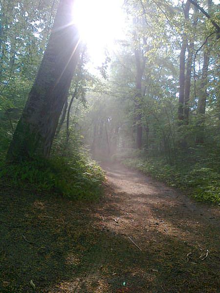 nebel im wald in goehren auf ruegen | Reiseblog Rügen