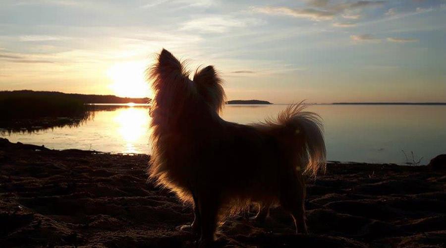 ruegen mit hund ralswiek bodden   Reiseblog Rügen