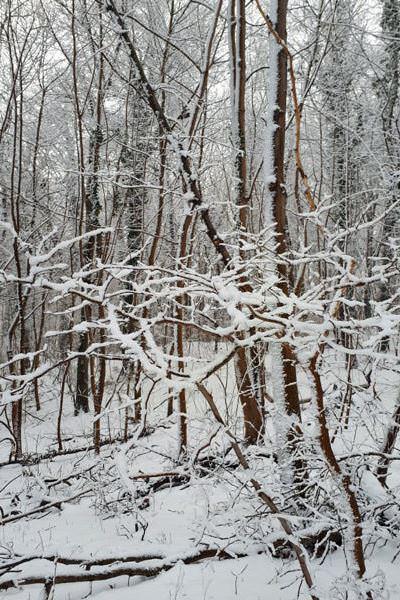 ruegen winterwald in goehren ostseekueste | Reiseblog Rügen
