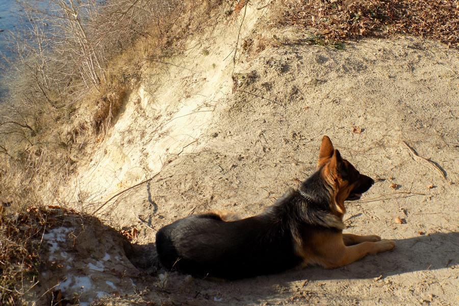 schaeferhund oskar auf der insel ruegen | Reiseblog Rügen