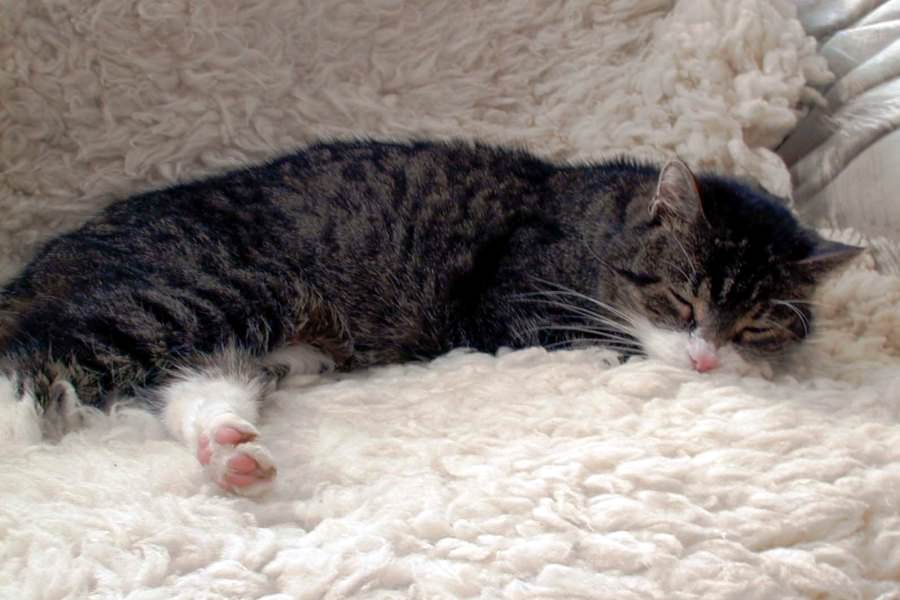 schlafende katze schonga | Reiseblog Rügen