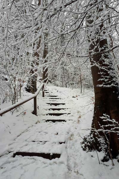 schnee wald ruegen goehren winter | Reiseblog Rügen