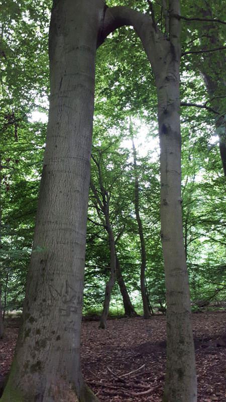 seltener baumbestand arboretum erbsland mirow | Reiseblog Rügen