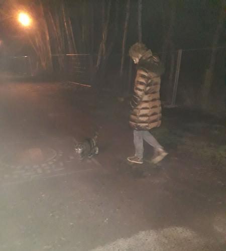 spazieren mit der katze in goehren auf der insel ruegen | Reiseblog Rügen