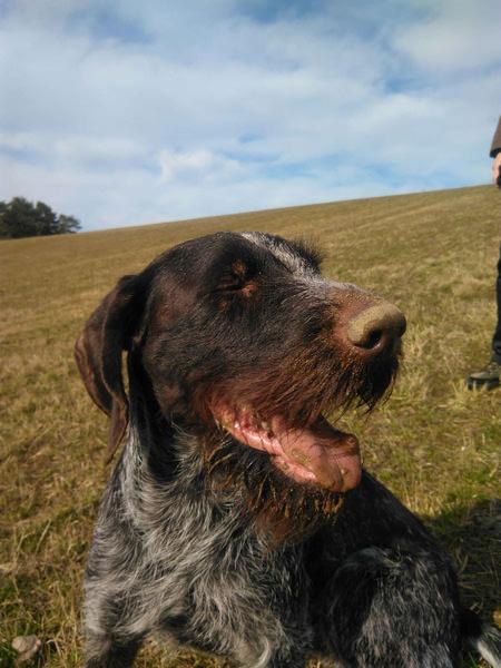 urlaub mit hund auf ruegen ostseebad goehren | Reiseblog Rügen