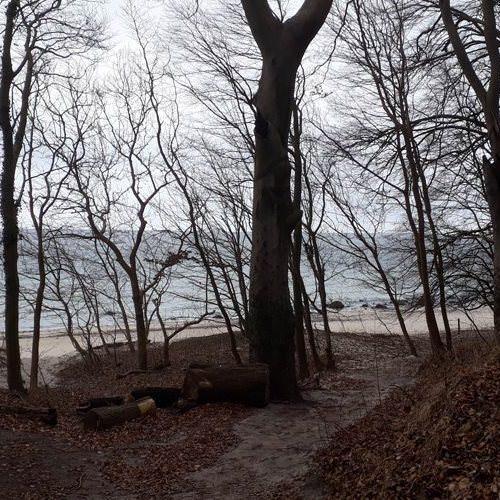 wald am nordstrand von goehren auf ruegen | Reiseblog Rügen