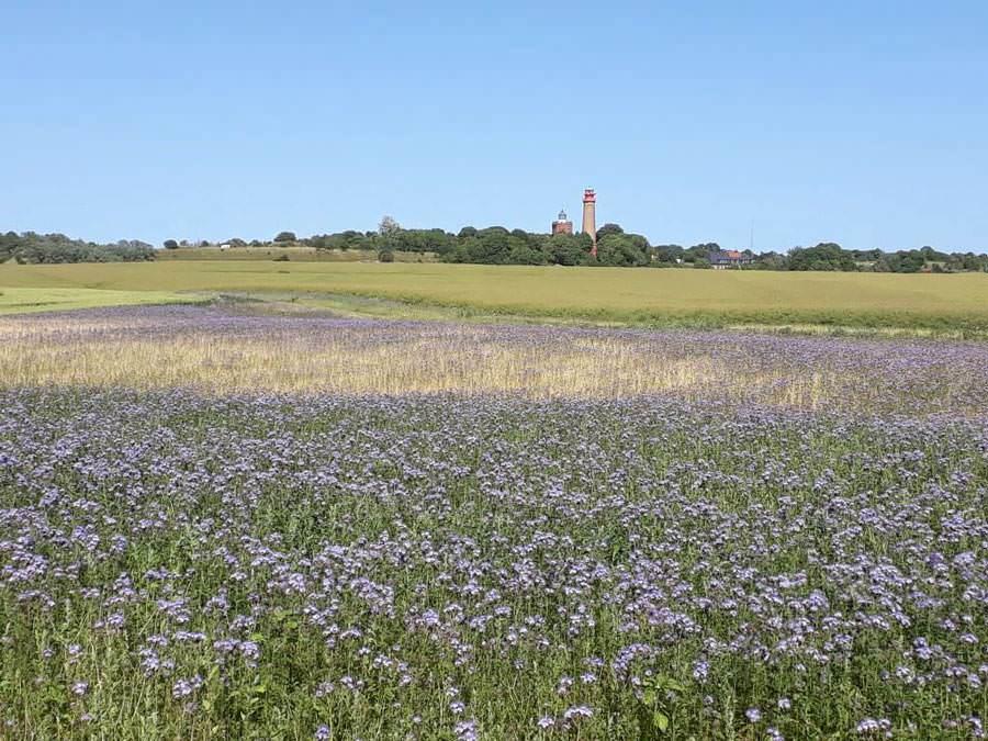 wiese vor leuchtturm kap arkona ruegen | Reiseblog Rügen