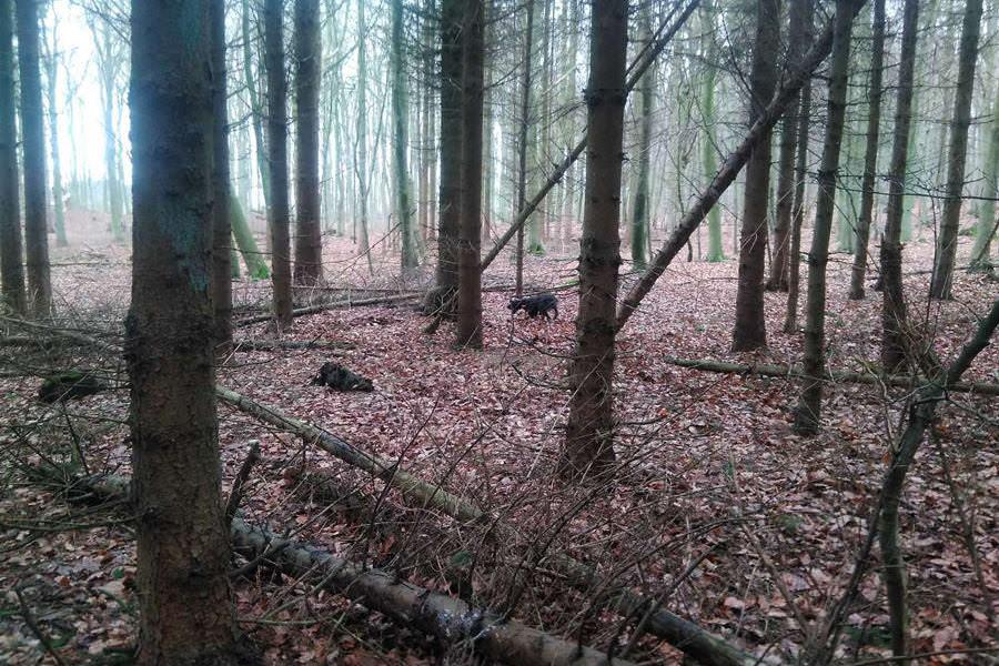 wildschwein jagd auf der insel ruegen | Reiseblog Rügen
